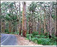 Nearby Karri forest