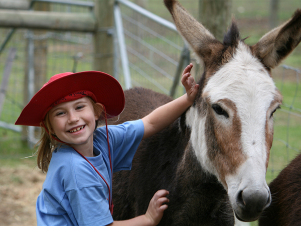 Talking to the Animals - Violet the Donkey