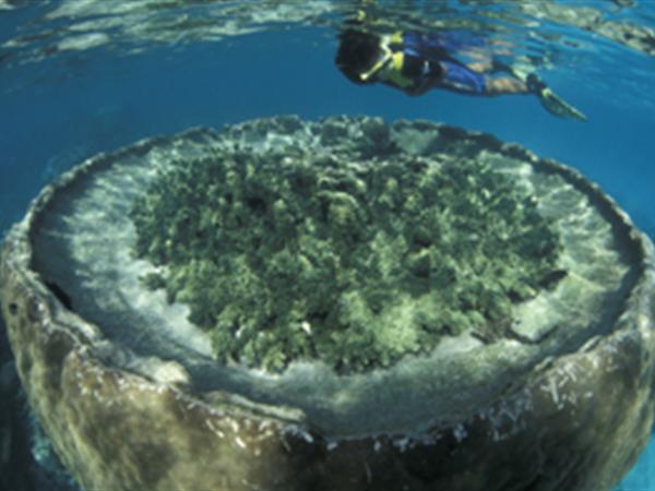Snorkelling at Sal Salis