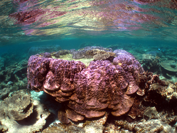 Coral in the Ningaloo Reef