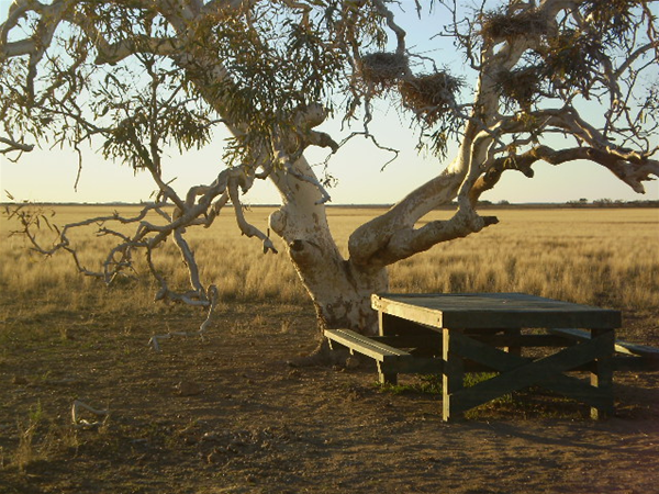 Wooleen Station Picnic table