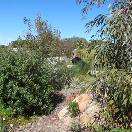 Australian bush garden providing animal habitat
