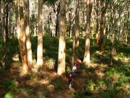 Mountain biking through Boranup Forrest