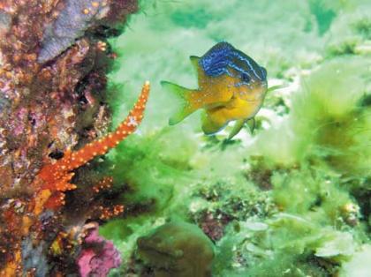 Underwater Aquarium