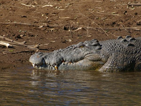 Mr Croc 2012