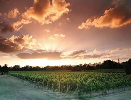 D Vine Wine Tours 2