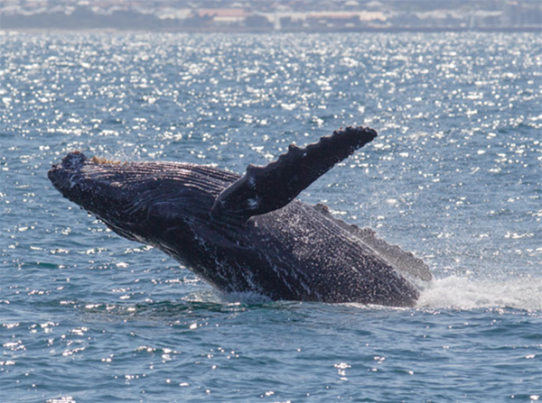 Mills Charters have been operating whale watching cruises for many years.