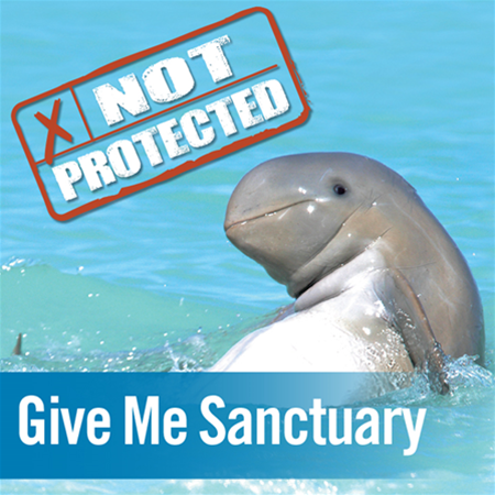 Snubfin dolphins, endemic to Northern Australia need a marine sanctuary