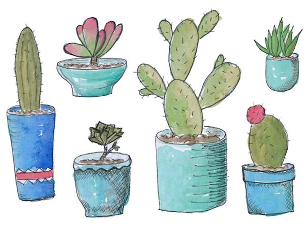 Succulent watercolours