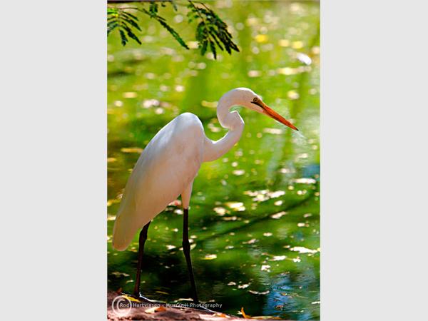 Kimberley Birdlife, W.A.