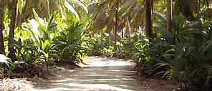 Stunning tropical surroudings