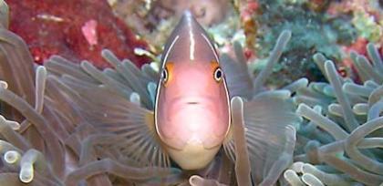 Vibrant underwater marine life