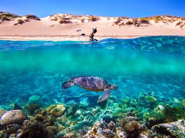 The Ningaloo Reef runs right up against the shore, so visitors can snorkel over pristine coral gardens mere footsteps from the sand - an experience found nowhere else in mainland Australia!