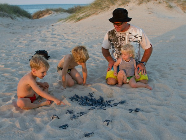 The Ningaloo turtle nesting season runs from November to March each year.