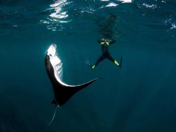 Book a tour to swim with Coral Bay manta rays, year round.