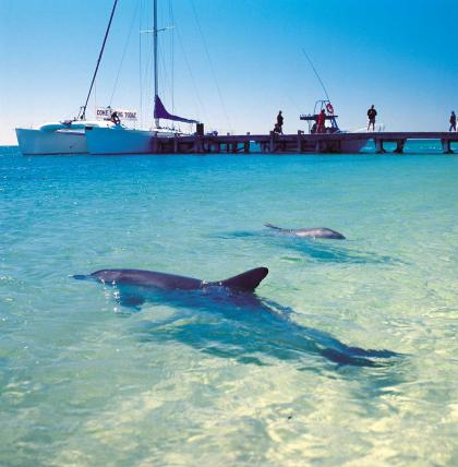 Dolphins at the Monkey Mia Jetty