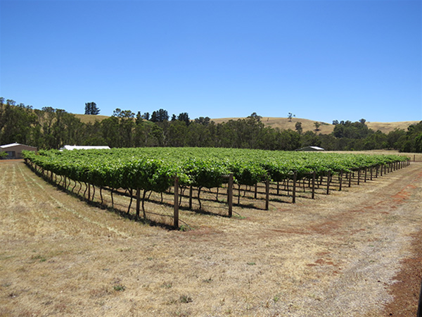 Bridgetown Winery vineyard