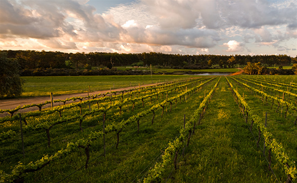 Get swept away in our beautiful vineyard views.